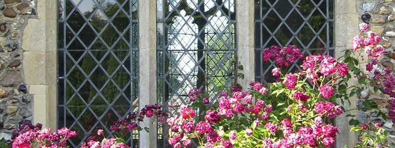 church roses 800